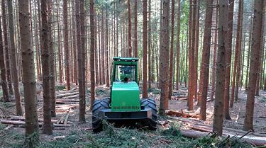 Forstflächen / -Immobilien