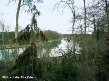 Blick-auf-die-Alte-Oder