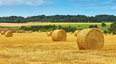 Agrarflächen / -Immobilien