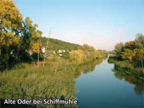 Alte-Oder-bei-Schiffmuehle